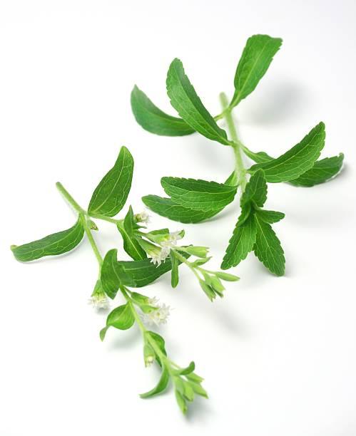 Stevia Blüte